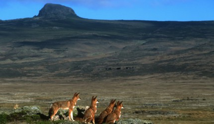 The Bale Mountains